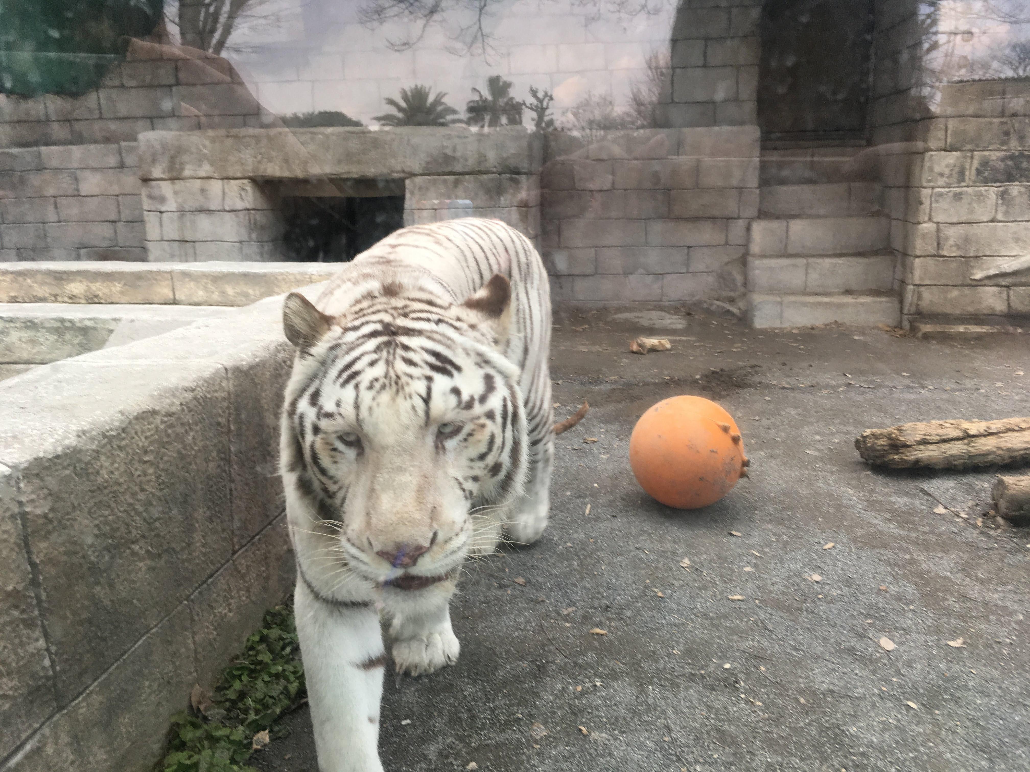 【埼玉】東武動物公園は動物園だけでも1日じゃ遊び尽くせないボリューム!